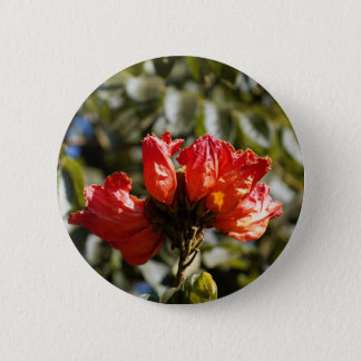 Flowers of an African tuliptree 2 Inch Round Button