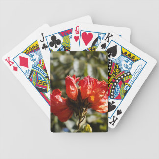 Flowers of an African tuliptree Bicycle Playing Cards