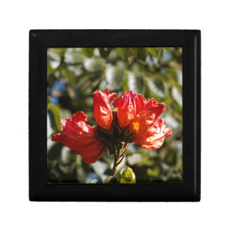 Flowers of an African tuliptree Gift Box