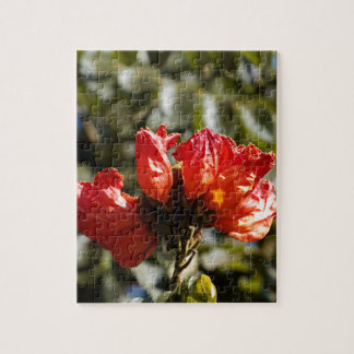 Flowers of an African tuliptree Jigsaw Puzzle