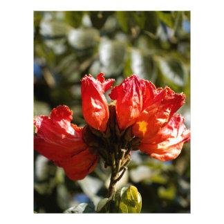 Flowers of an African tuliptree Letterhead