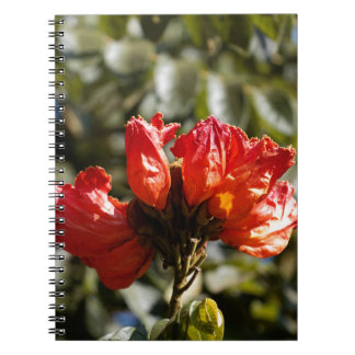 Flowers of an African tuliptree Notebook