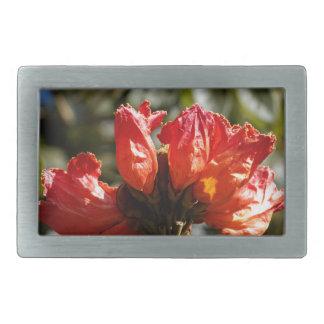 Flowers of an African tuliptree Rectangular Belt Buckle