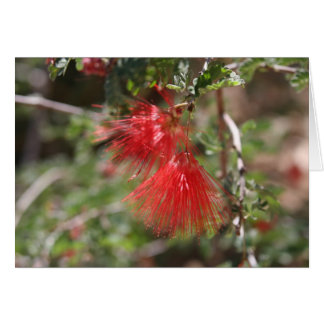 Flowers of Arizona Card
