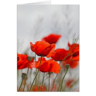 Flowers of common poppy in a field. card