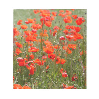 Flowers of common poppy in a field. notepad