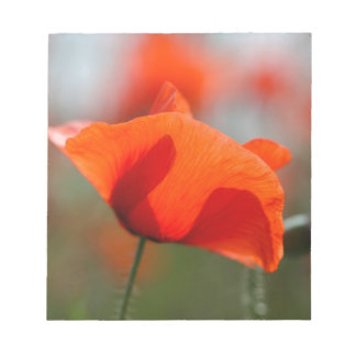 Flowers of common poppy in a field. notepads