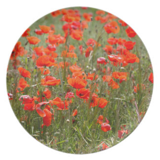 Flowers of common poppy in a field. party plates