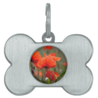 Flowers of common poppy in a field. pet ID tags
