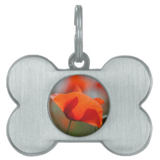 Flowers of common poppy in a field. pet name tag
