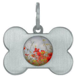 Flowers of common poppy in a field. pet name tags