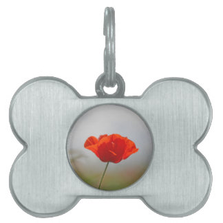 Flowers of common poppy in a field. pet tags