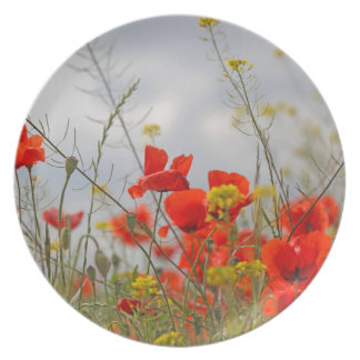 Flowers of common poppy in a field. plates