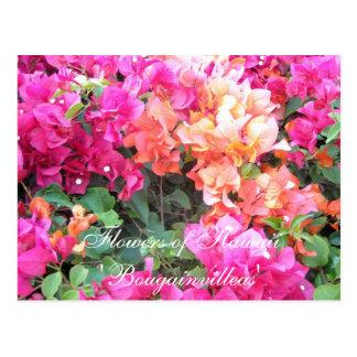 Flowers of Hawaii Postcard