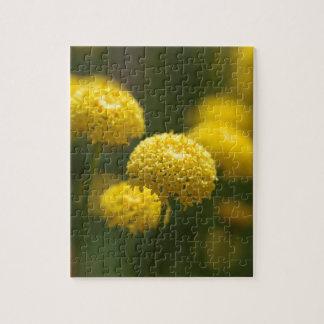 Flowers of Santolina rosmarinifolia Jigsaw Puzzle