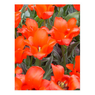 """""""Flowers of Spring""""  CricketDiane Art Photography Postcard"""