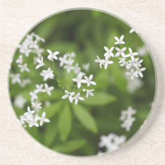 Flowers of sweetscented bedstraw (Galium odoratum) Drink Coasters