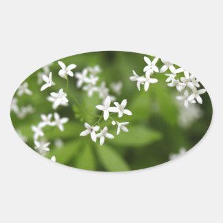 Flowers of sweetscented bedstraw (Galium odoratum) Oval Sticker
