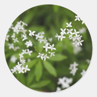 Flowers of sweetscented bedstraw (Galium odoratum) Round Sticker