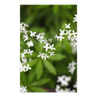 Flowers of sweetscented bedstraw (Galium odoratum) Stationery