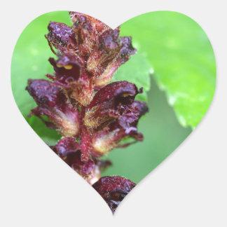 Flowers of the broomrape Orobanche gracilis Heart Sticker