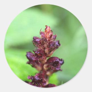 Flowers of the broomrape Orobanche gracilis Round Sticker