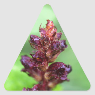 Flowers of the broomrape Orobanche gracilis Triangle Sticker