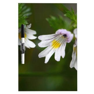 Flowers of the Eyebright Euphrasia rostkoviana Dry Erase Board