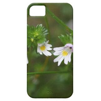 Flowers of the Eyebright Euphrasia rostkoviana iPhone 5 Case