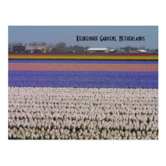 Flowers of the Netherlands Postcard