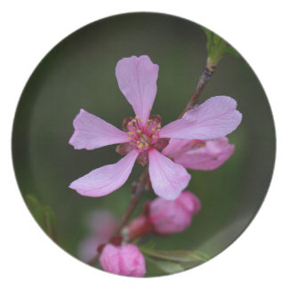 Flowers of the Russian Almond Tree Dinner Plate