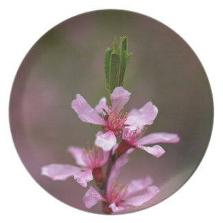Flowers of the Russian Almond Tree Party Plates