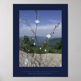 FLowers of the Sierra Nevadas Poster