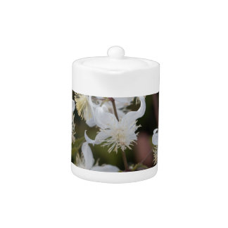 Flowers of Traveller Joy (Clematis brachiata)