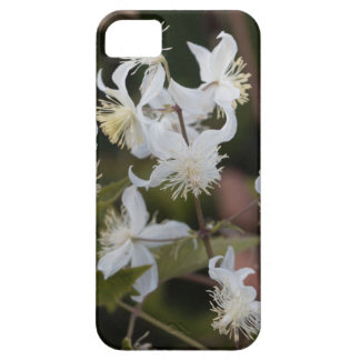 Flowers of Traveller Joy (Clematis brachiata) Case For The iPhone 5