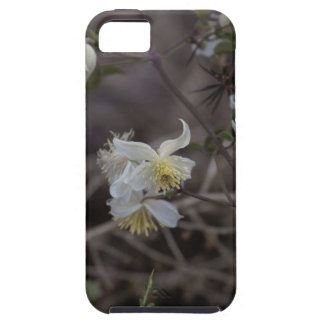 Flowers of Traveller Joy (Clematis brachiata) Case For The iPhone 5