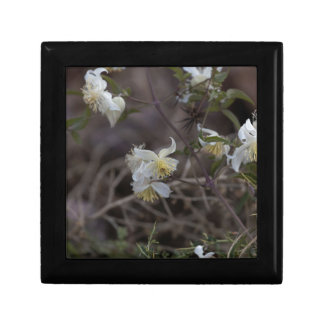 Flowers of Traveller Joy (Clematis brachiata) Gift Box