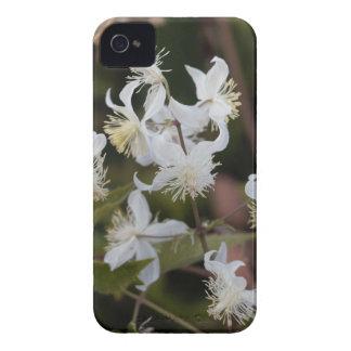 Flowers of Traveller Joy (Clematis brachiata) iPhone 4 Case-Mate Cases