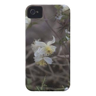 Flowers of Traveller Joy (Clematis brachiata) iPhone 4 Cover