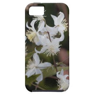 Flowers of Traveller Joy (Clematis brachiata) iPhone 5 Cover
