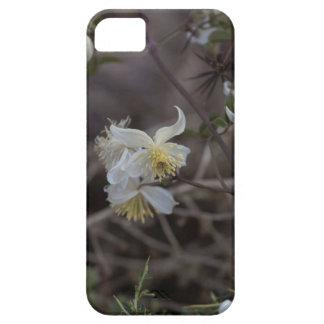 Flowers of Traveller Joy (Clematis brachiata) iPhone 5 Covers