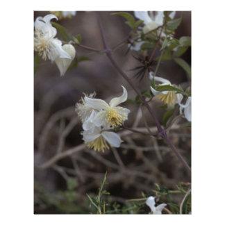 Flowers of Traveller Joy (Clematis brachiata) Letterhead