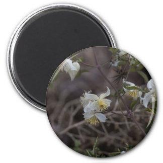 Flowers of Traveller Joy (Clematis brachiata) Magnet
