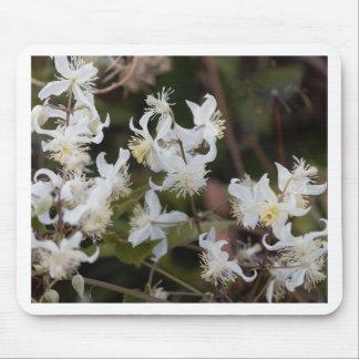 Flowers of Traveller Joy (Clematis brachiata) Mouse Pad