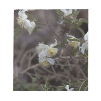 Flowers of Traveller Joy (Clematis brachiata) Notepad