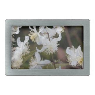 Flowers of Traveller Joy (Clematis brachiata) Rectangular Belt Buckle