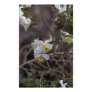Flowers of Traveller Joy (Clematis brachiata) Stationery