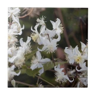 Flowers of Traveller Joy (Clematis brachiata) Tile