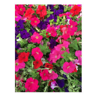 Flowers Photo Postcard