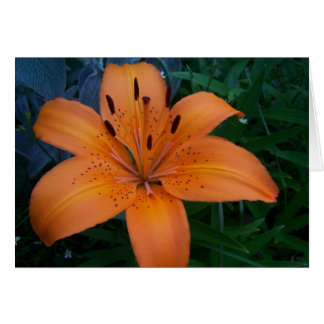 Flowers & Plants Card